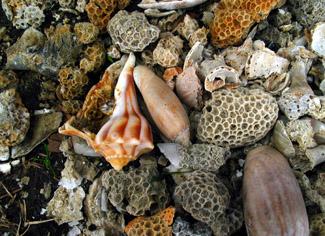 Island Experience Edisto Beach Shells