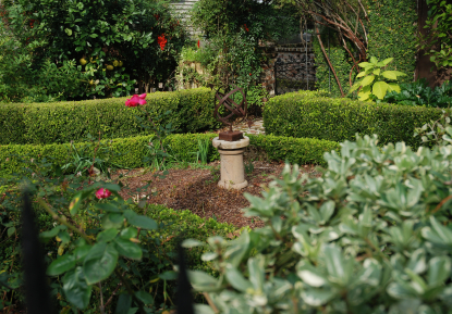 19 elegant list of gardening in charleston for Landscaping plants south carolina